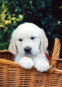 Sweet Pup