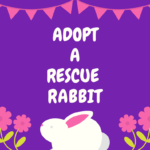 Adopt a rescue rabbit month